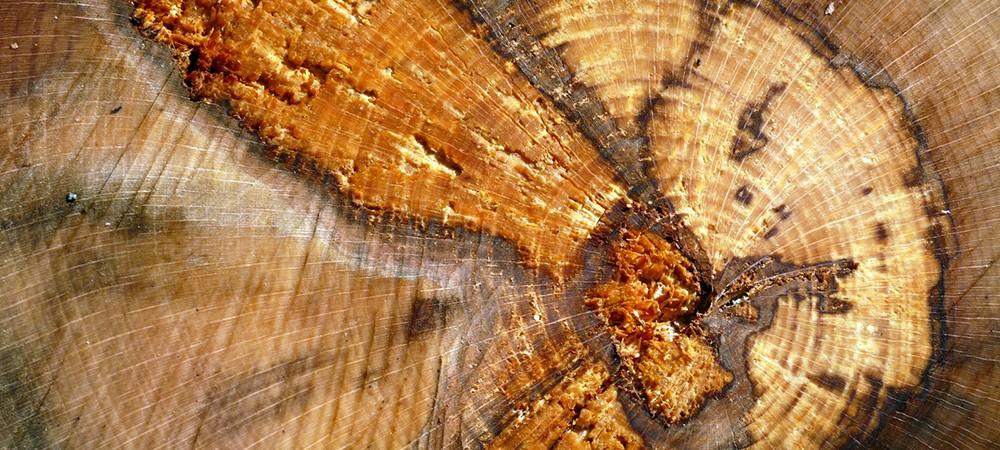 Découpe de bois à l'abbaye de Boscodon
